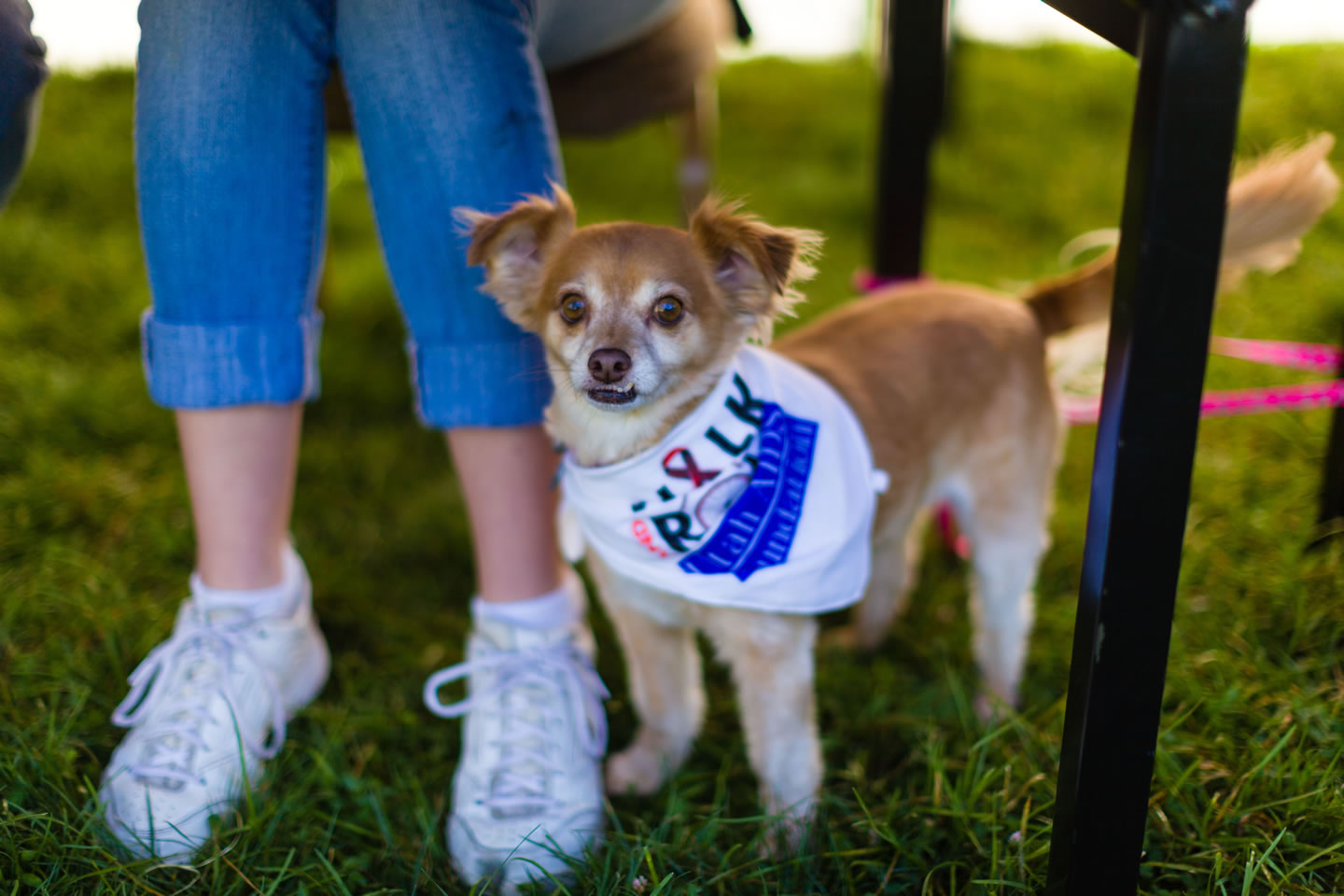 Dogs are encouraged for the Walk for Life