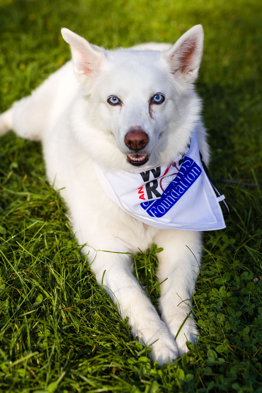 Dog sporting a neckerchief