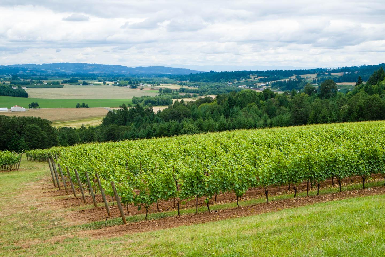 View of vineyard overlooking wine country
