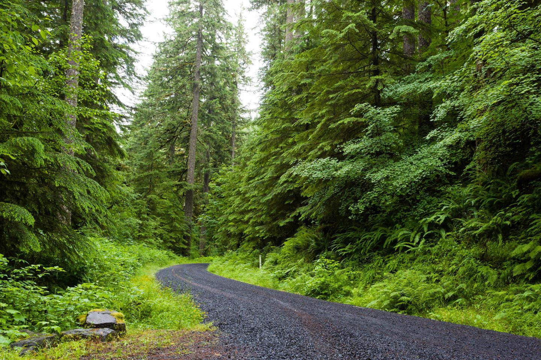 Trails through the Oregon forest