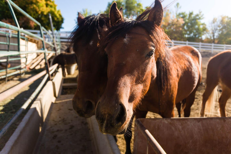 Horses at the petting zoo