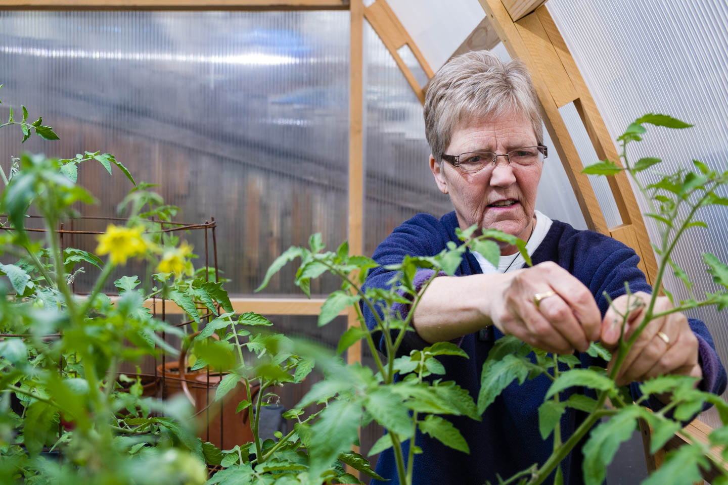 Laurie Wood works in the greenhouse