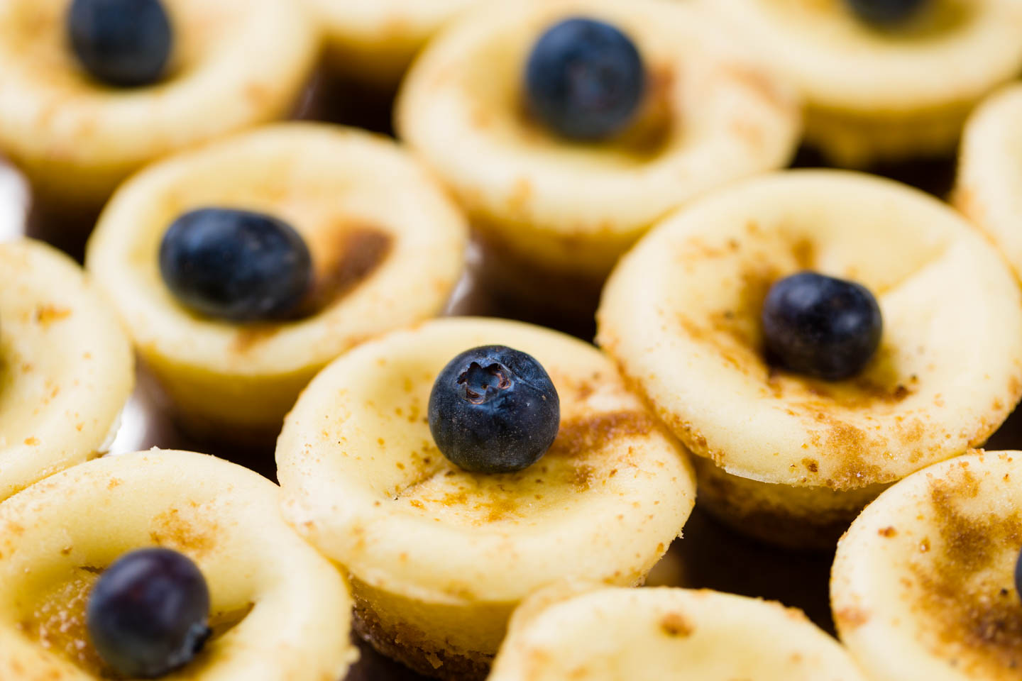 Mini blueberry cheesecake cupcakes