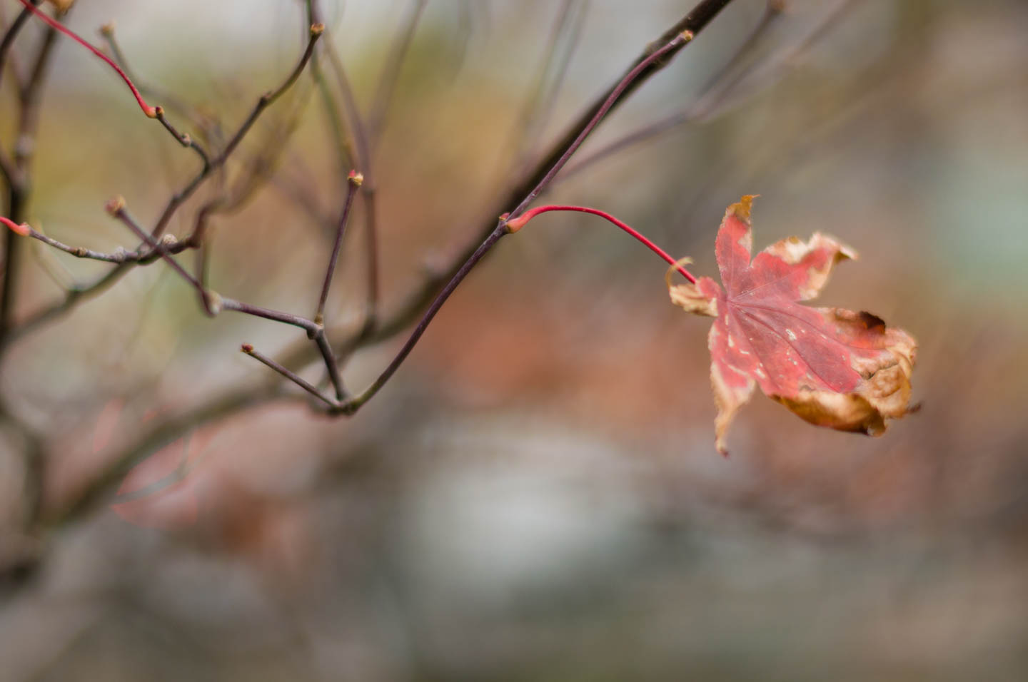 Last leaves of autumn